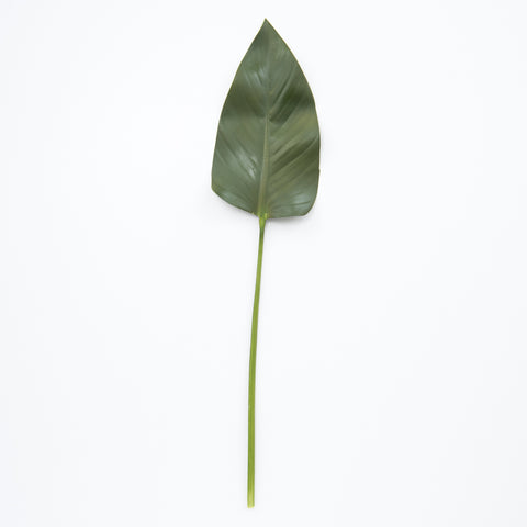 Rubber Fig Leaf