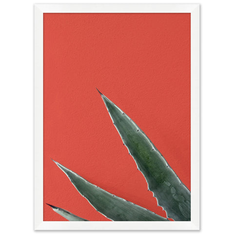 artwork of an agave plant juxtaposed on a vibrant red background in a white frame