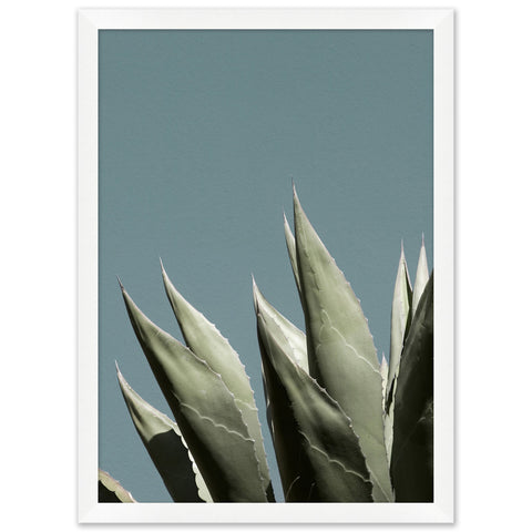 artwork of an agave plant juxtaposed on a soft blue background in a white frame