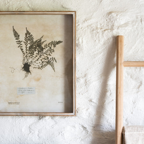 large wooden framed pressed botanical print art
