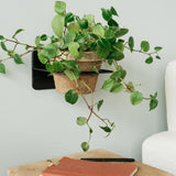 Molly Wall Plant Holder