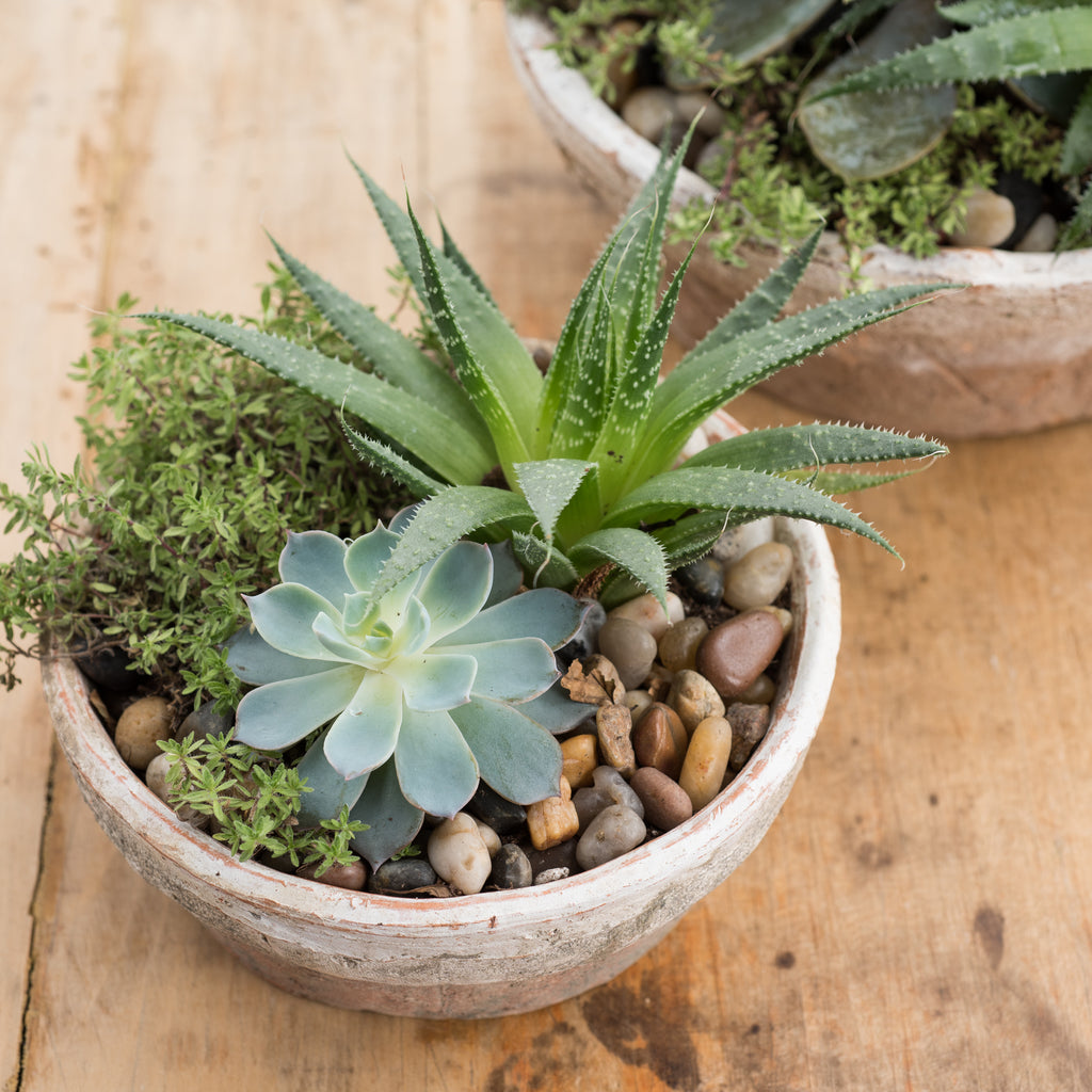 organic clay planter bowl