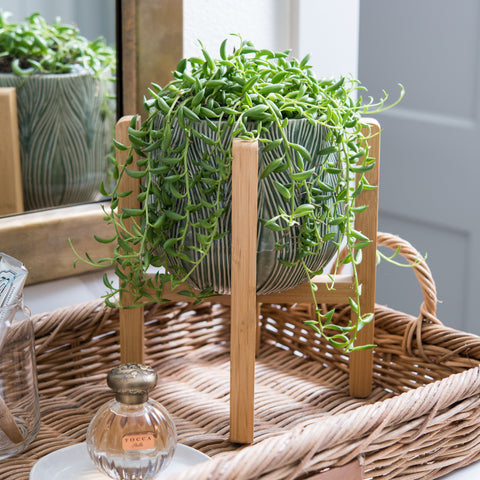 green modern ceramic planter with wooden stand