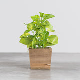 faux potted basil in wooden planter