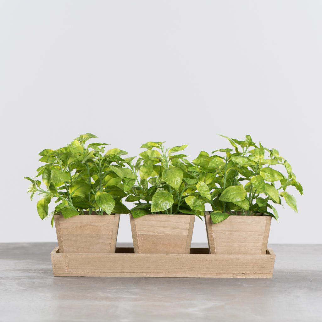 faux potted basil in trio wooden planter