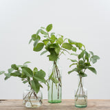 glass apothecary bottle vases