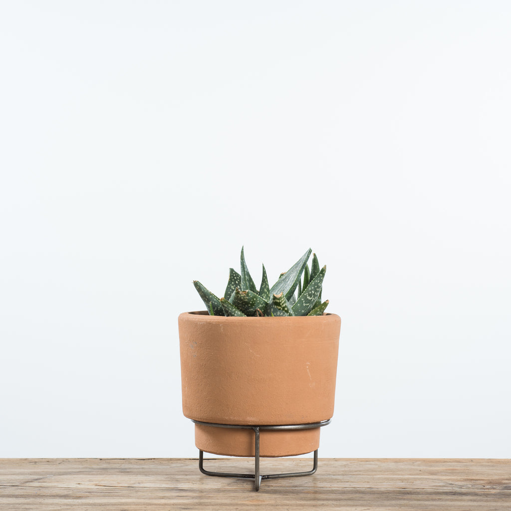 terracotta pot on metal stand