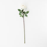 large white garden rose stem