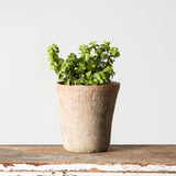 Fynn Rose Pot