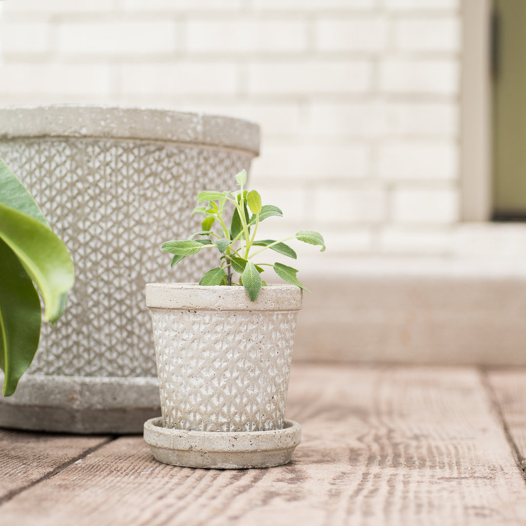 cement plant pot with basket texturing