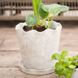scalloped edge cement pot with saucer