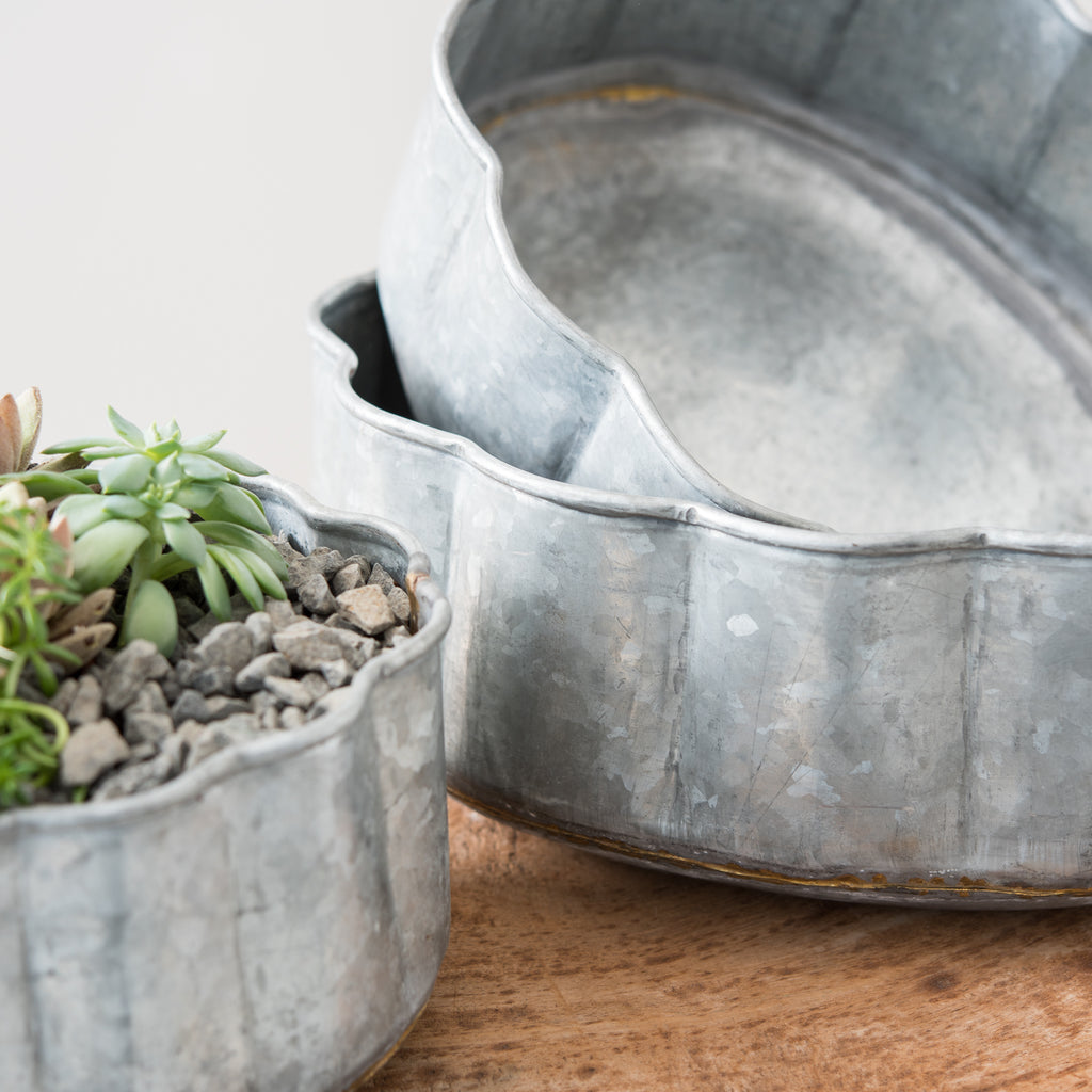 scalloped metal planter