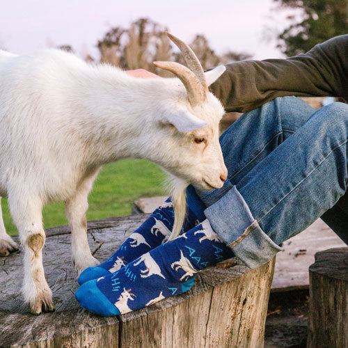 "A man wearing fun goat patterned socks that say ""Aaaah"" while petting a goat"