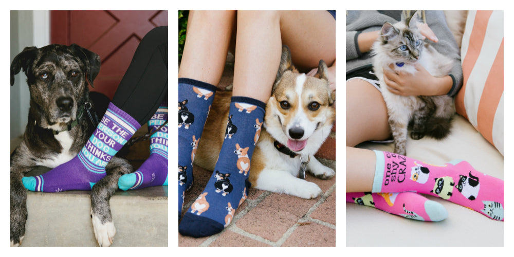 A variety of cute dog and cat socks
