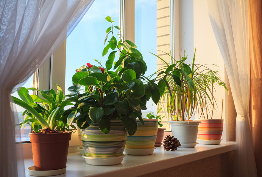 potted green plants in window