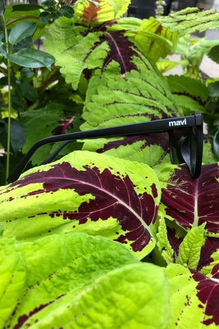 Mavi Sunglasses in Black