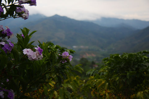 Colombia, Finca Villa, Tolima, Natural Process