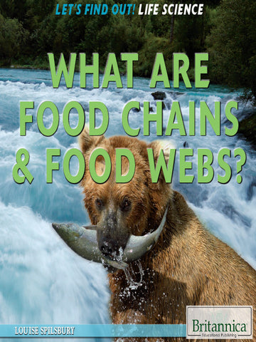 What Are Food Chains & Food Webs?