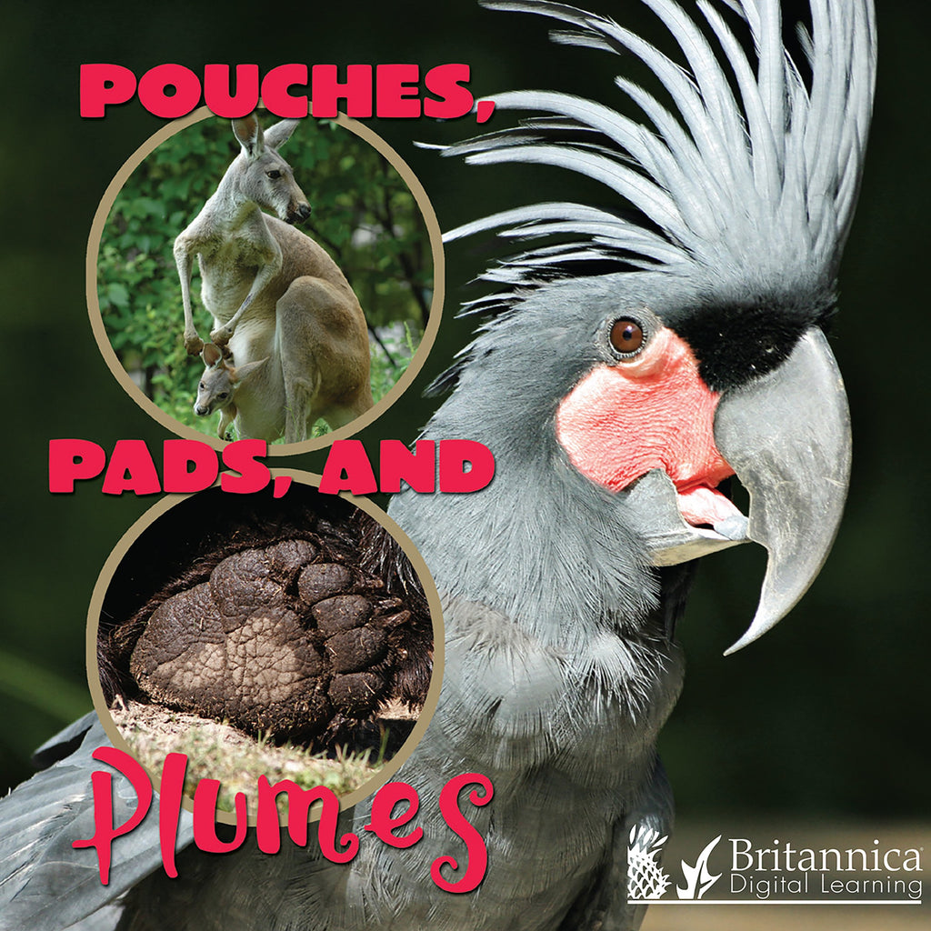 Pouches, Pads, and Plumes