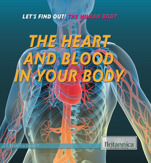 The Heart and Blood in Your Body