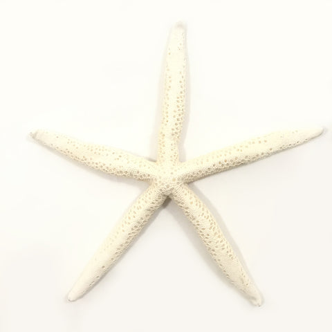 Large Pencil Starfish