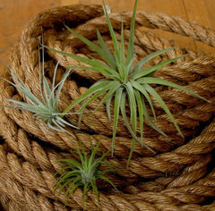 Airplant Selection