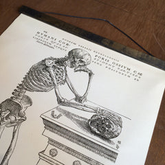 Vintage Anatomy Reproduction Human Skeleton Print