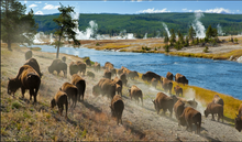 Load image into Gallery viewer, Yellowstone