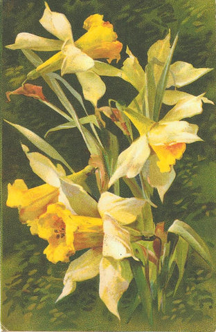 daffodils, vintage image, victorian flowers
