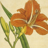 Curtis Botanical Prints: 60 images - Lunagirl