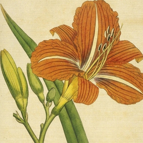Curtis Botanical Prints: 60 images