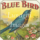 55 Birds Vintage Labels Download Pack - Lunagirl