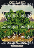 Antique Seed Packet Lithographs -- CD or Download - Lunagirl
