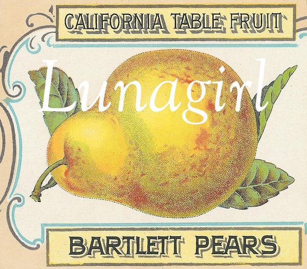Vintage Can & Crate Labels: 400 Images - Lunagirl