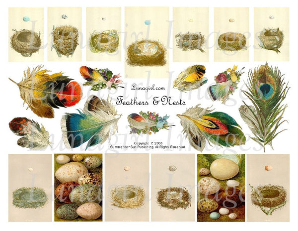 Feathers & Nests Digital Collage Sheet - Lunagirl