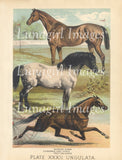 digital vintage image animal victorian horses antique nature print art