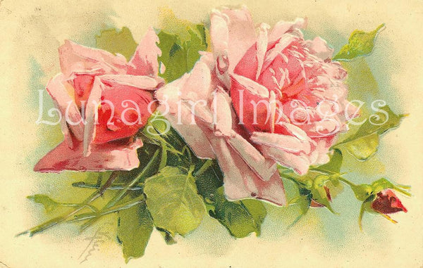 72 Vintage Victorian Pink Roses Download Pack - Lunagirl