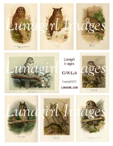 Owls Digital Collage Sheet - Lunagirl