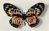 Butterfly Images -- CD or Download - Lunagirl