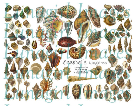 Seashells Digital Collage Sheet - Lunagirl