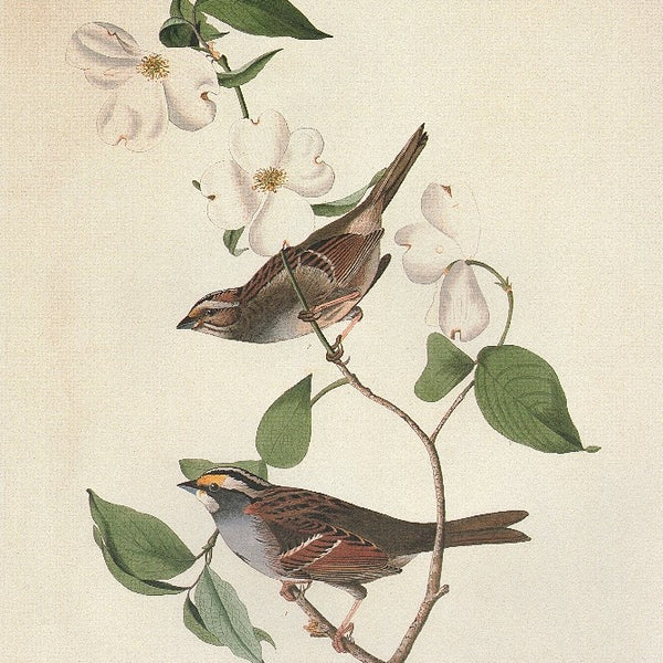 Audubon's Birds of America: 110 Prints