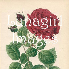 45 Vintage Victorian Red Roses Download Pack - Lunagirl