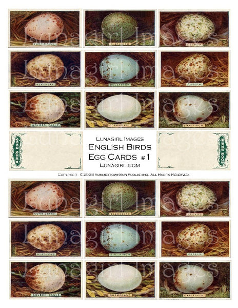 Birds Eggs Digital Collage Sheet - Lunagirl