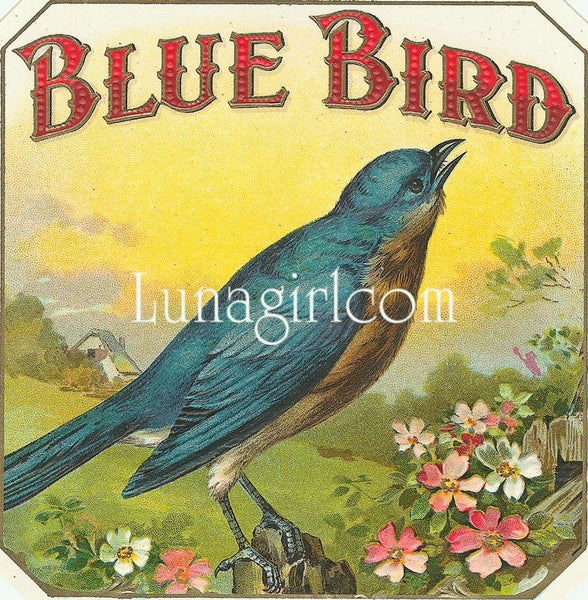 Antique Cigar Labels: 2500 Images - Lunagirl