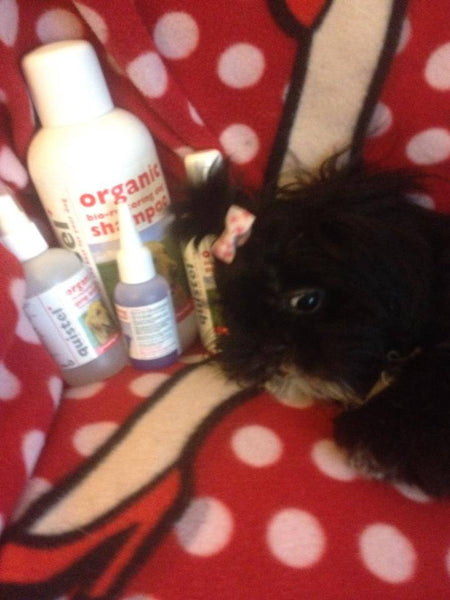 Betty the Shih tzu, winning puppy with quistel dog shampoo