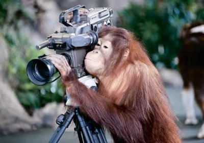 funny, pet, video, pet videos, quistel, monkey, orang-utan,