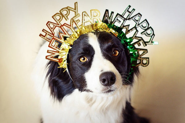 happy new year, dogs, pets, grooming, manchester, uk