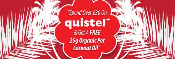 quistel, dog, pet, grooming, coconut oil, pet coconut oil, organic,