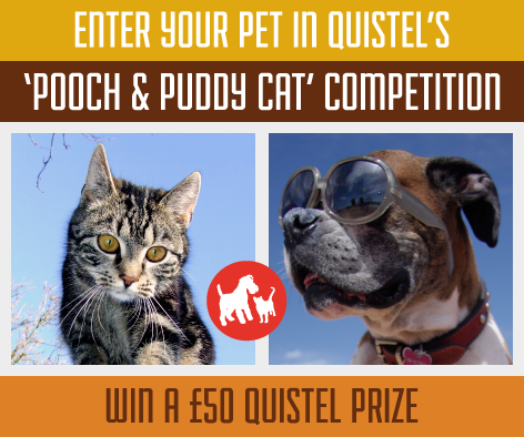 Quistel's facebook pet photo competition