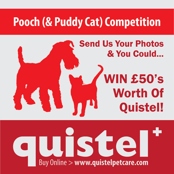 Quistel, Pooch & Puddy Cat, Competition, Dog, Cat